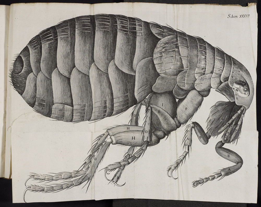 An analysis of the works by robert hooke