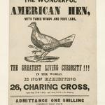 The Wonderful American Hen