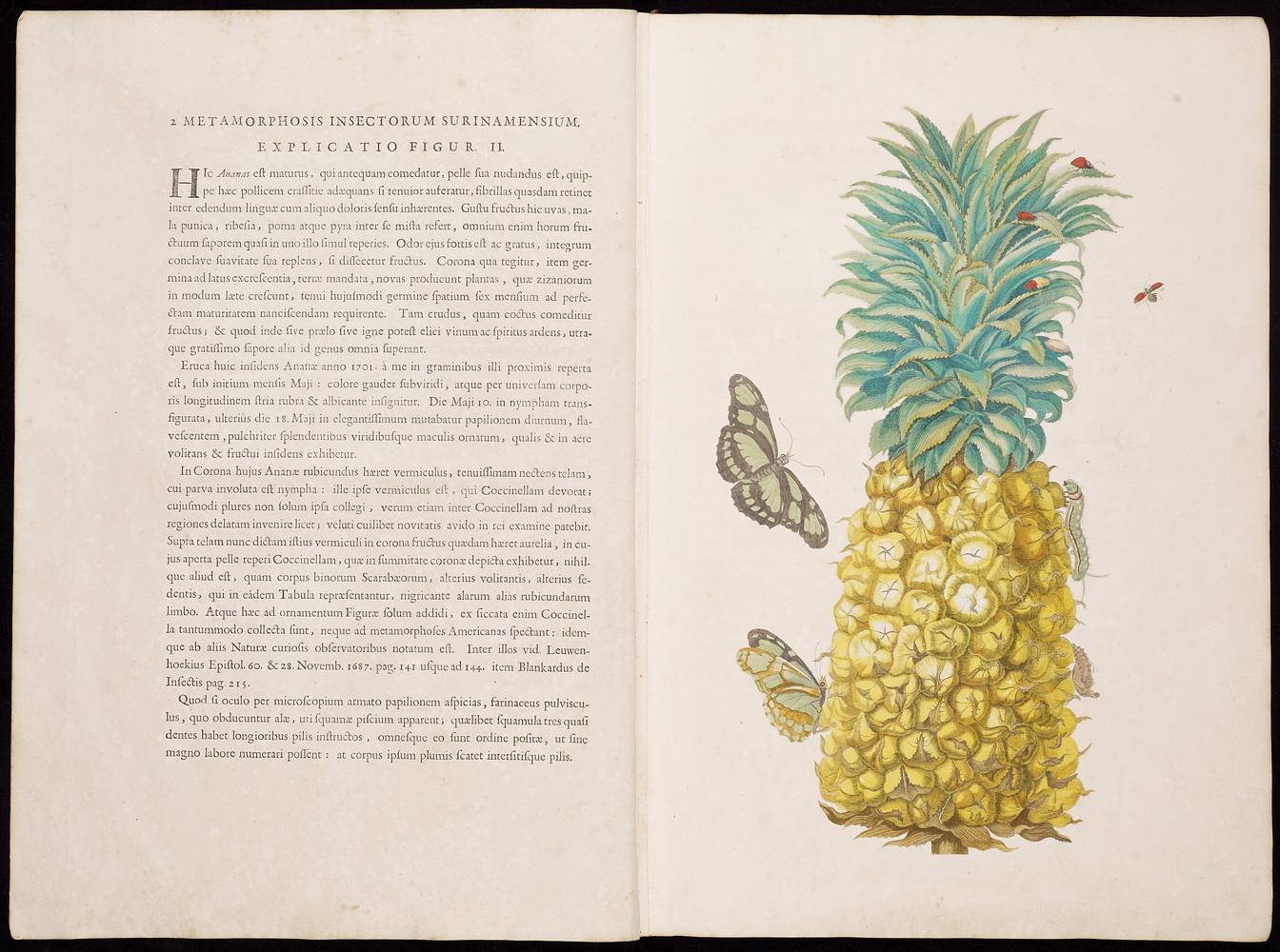 Maria Sibylla Merian, Dissertatio de generatione et metamorphosibus insectorum Surinamensium